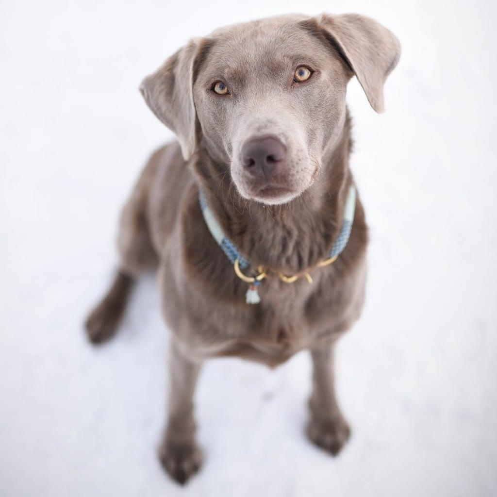 Mein Hund Ruby. Besitzerin Sarah Volpert, Gründerin von Seelenkonferenz