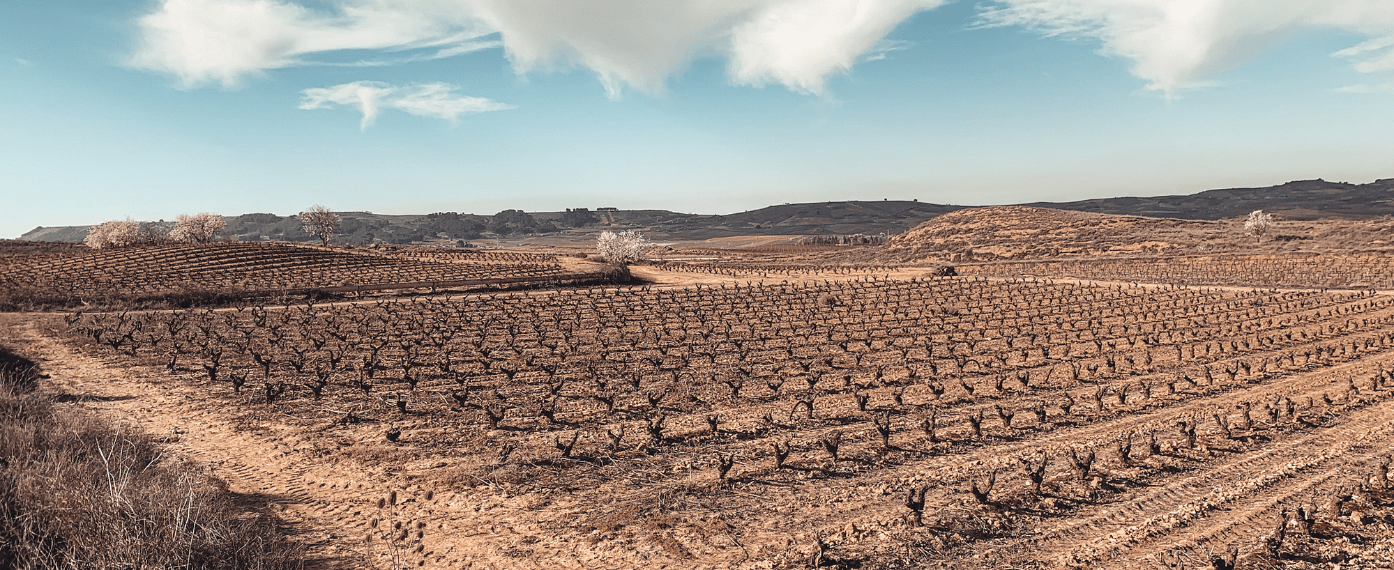 Buen Camino, ein Foto aus dem Jakobsweg